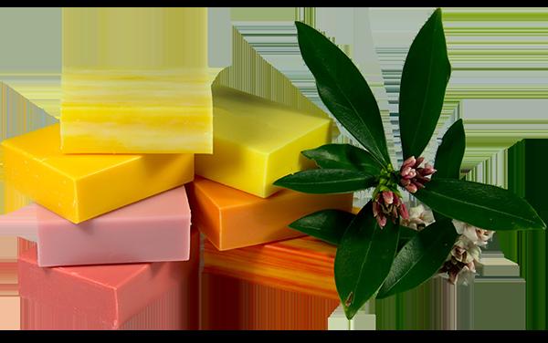 The Scented Soap Deli Soaps